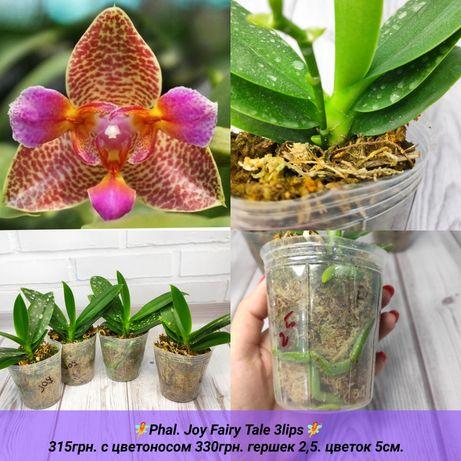 Орхидеи: Joy, Buddha's, Bear King, Sameer Rose, Panda, SanBeauty