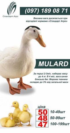 Мулард ОПТ и Розница