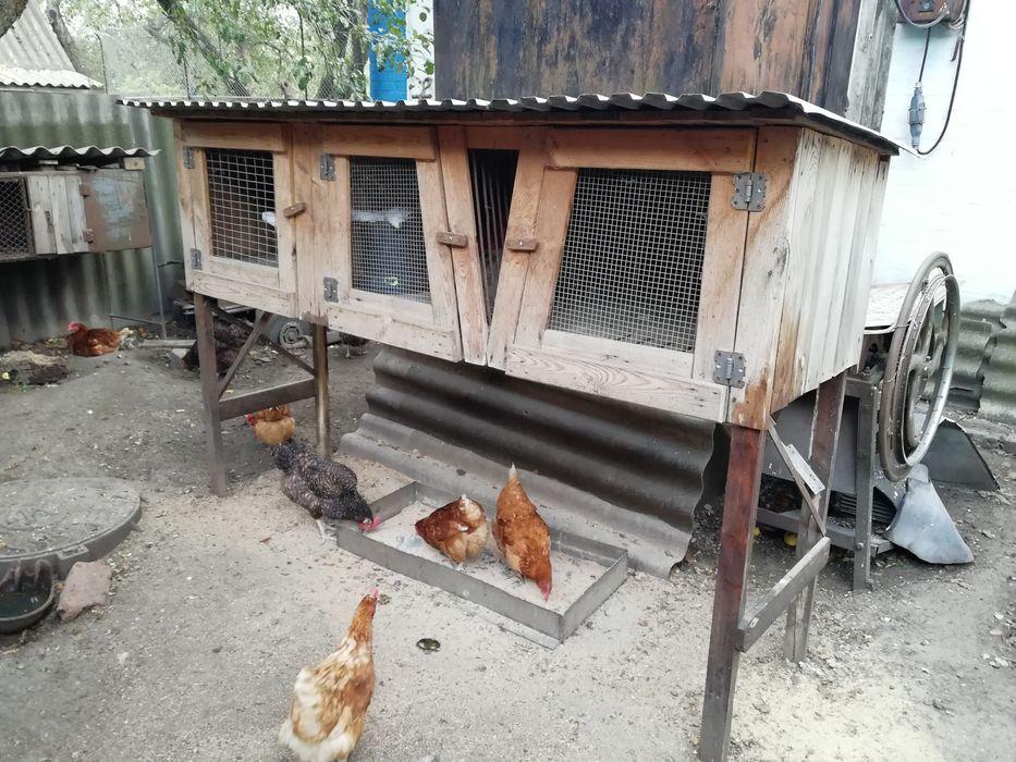Продам клетку для кроликов Миргород - изображение 1