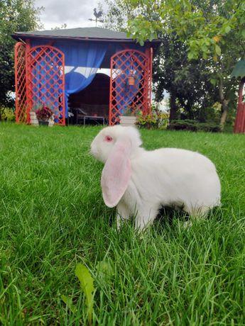 Zwierzęta i gryzonie króliki
