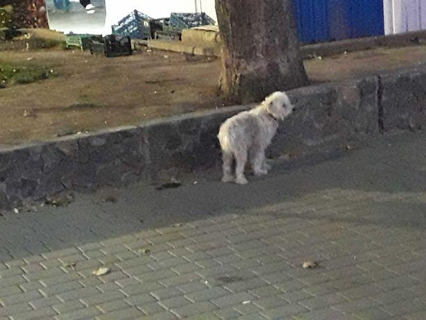 Кто потерял собаку.