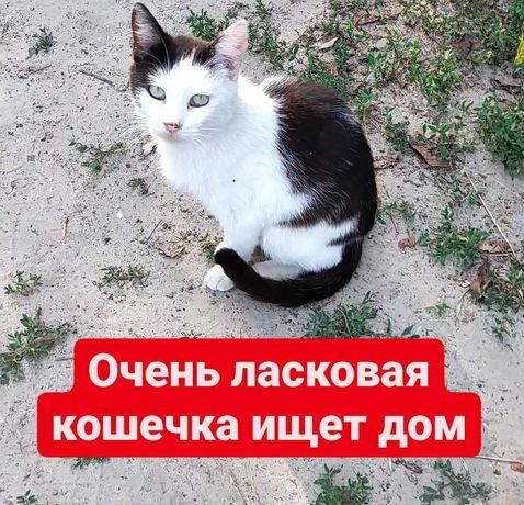 Очень ласковая кошечка ищет дом, кошка