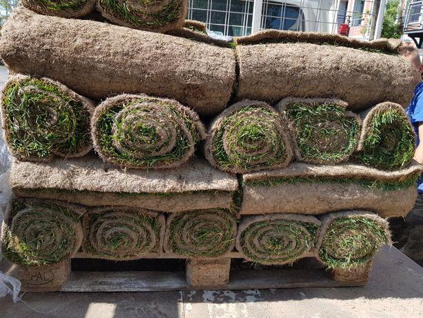 Trawa z rolki trawa w rolkach