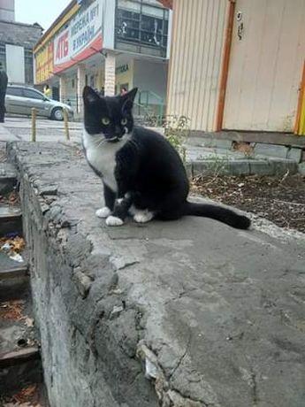 Отдам черно-белую кошку,стерилизована