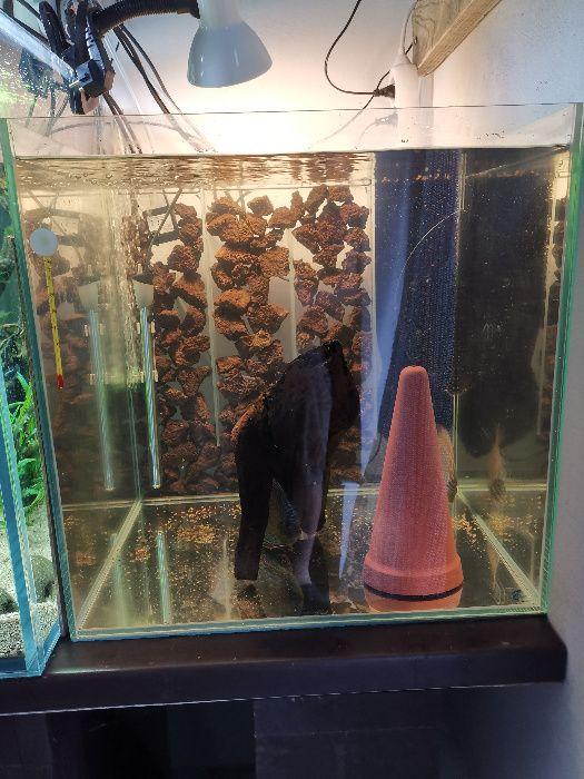 Akwarium kostka 50x50x50