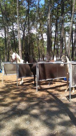 Baias para cavalos