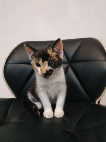 Oddam kotkę 3 miesięczną