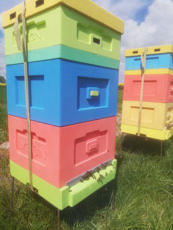 Ule pszczoły pszczoly