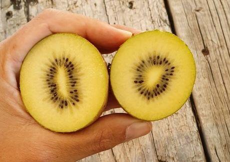 RARO - Kiwi Amarelo Mamute - MUITO DOCE - Planta viva de coleção