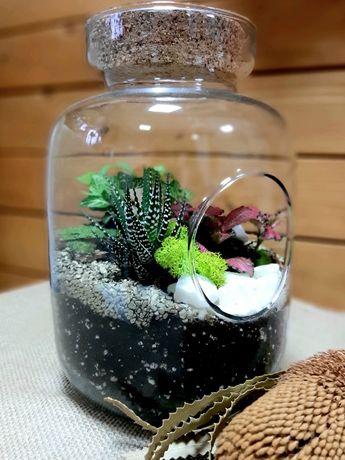 Las w szkle w słoiku naczyniu kompozycja roślinna terrarium lasy słoju