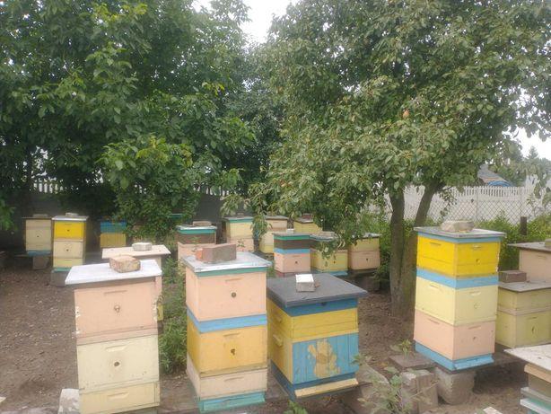 Sprzedam Pasiekę pszczoły rodziny pszczele roje ule ul matki pszczele