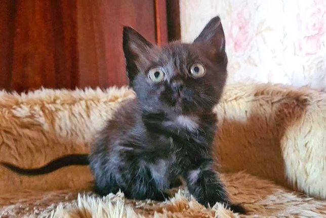 Черный кот (котенок) Шредер в поисках семьи - 1,5 месяца