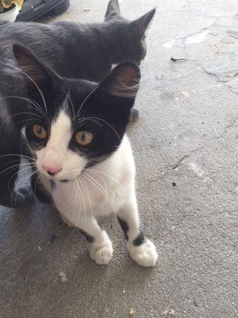 Gatinhos com 3 meses para adopcao, muito meiguinhos e limpinhos