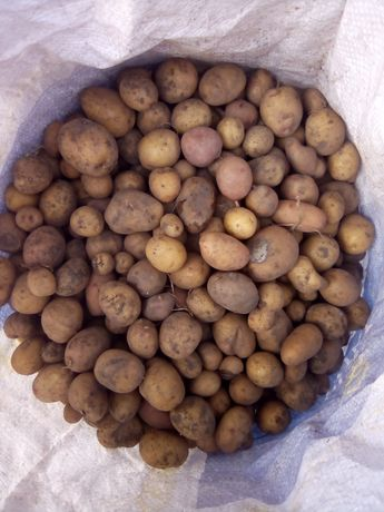 Продам мелкую картошку