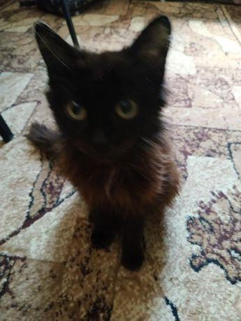 Найден котенок на р. Боровой