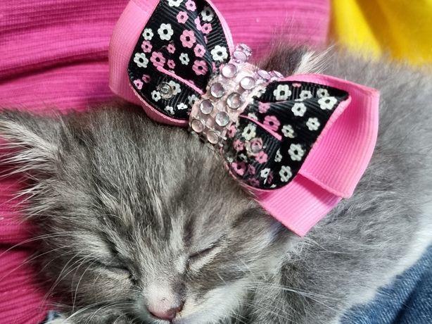 Отдам прекрасного котёнка!!!