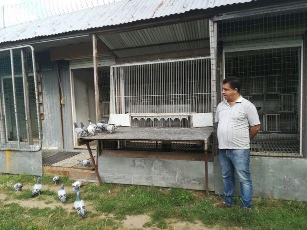 Vendo Pombos Correios LER DESCRIÇÃOde2