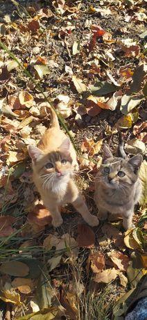 Котик рыжий и кошечка