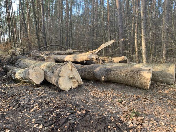 Drzewo drewno liściaste buk jesion