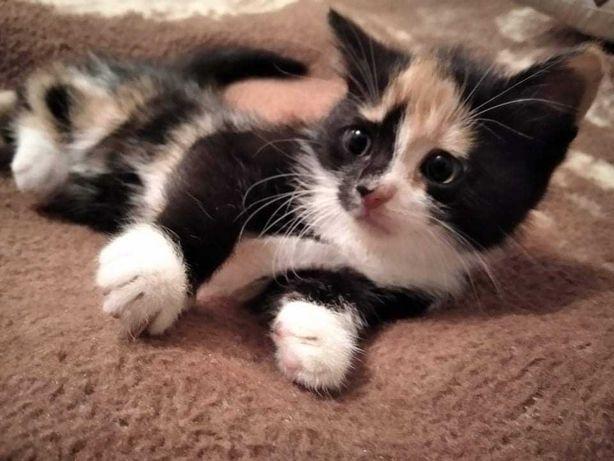 Кошеня дівчинка. Киця.