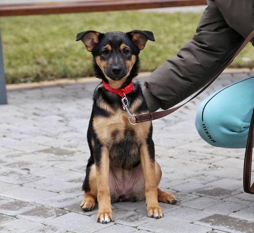 Щенок в добрые руки (щенки, собака)
