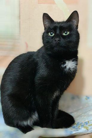 Ларсон - ну очень ласковый кот, черный короткошерстный