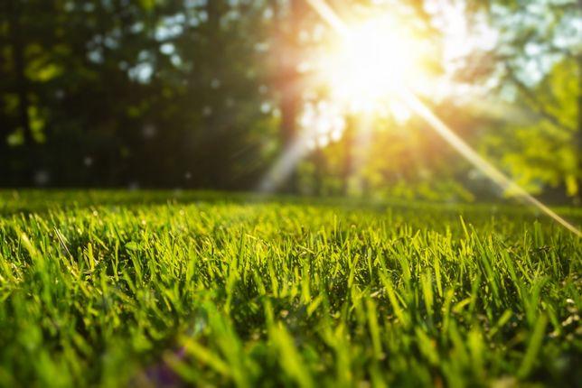 Zakładanie trawników,budowa ogrodów,systemy nawadniania,projektowanie