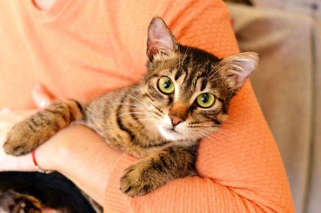 Кот, котик, в добрые руки