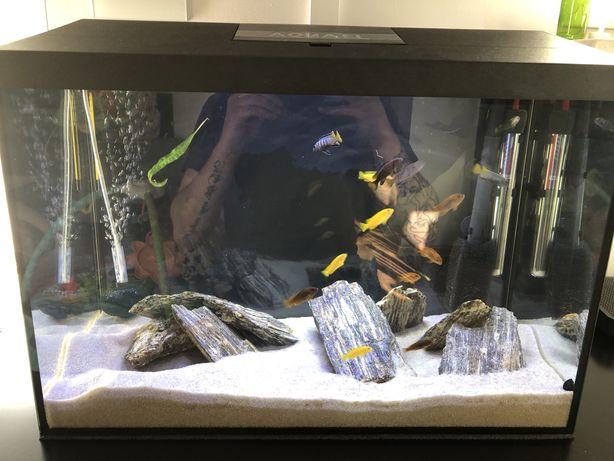 Akwarium aquael leddy 72 l, caly zestaw