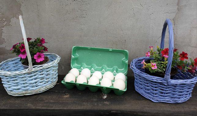 Jaja lęgowe kur Zielononóżki. Czyste rasowo. Chów ekologiczny.