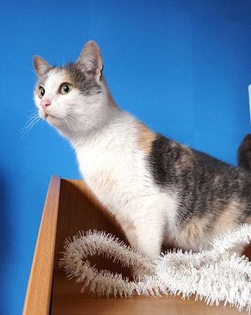 Котейка высматривает счастье, кошка в частный дом