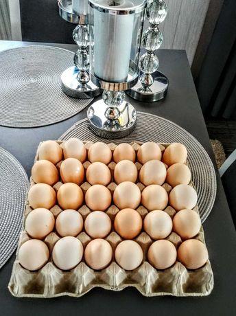 Jajka wiejskie małe+ KONKURS