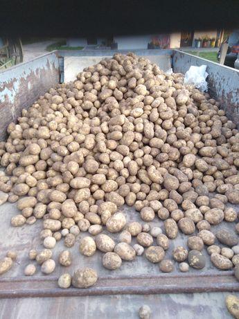 Ziemniaki  jadalne białe, żółte