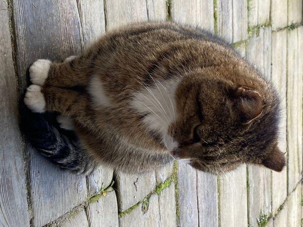 Kotki szukają domu