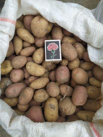 Мелкая картошка