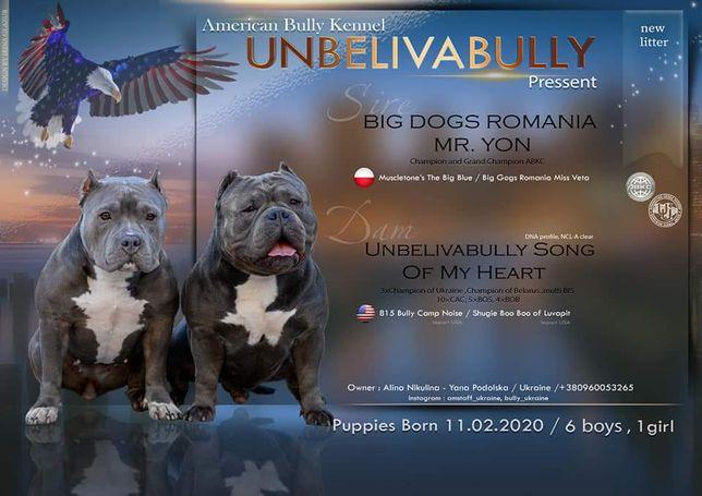 Unbelivabully новые щенки