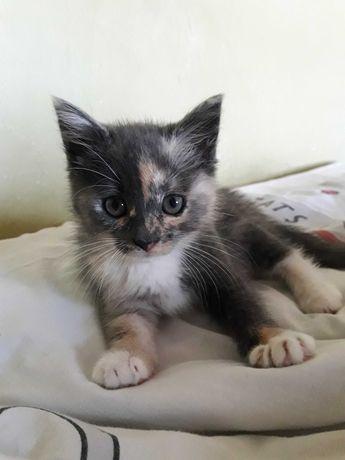 Віддам в добрі руки котенят, кошенят, кошеня, котик, кішка
