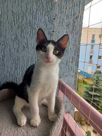 Przesłodki kociak Bazyl do pokochania! Kocięta do adopcji