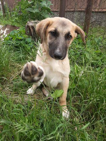 Собачка девочка стерилизована ищет дом