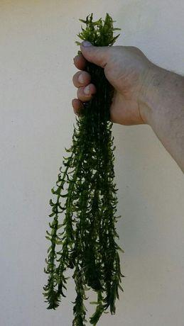 Plantas aquáticas - 5 molhos