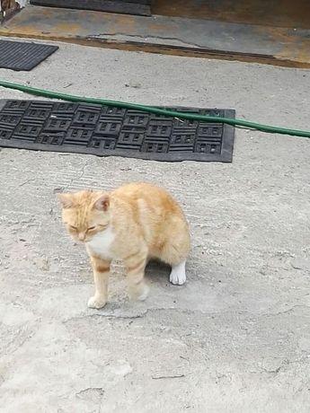 Zaginęła ruda kotka , dwuletnia, Mała Nieszawka !!!