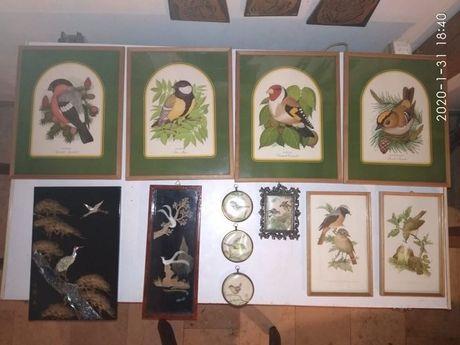 Ptaki, ptaszki obrazy, porcelana . Kolekcja