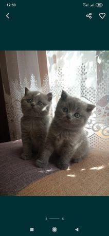 Чистокровні котики!!