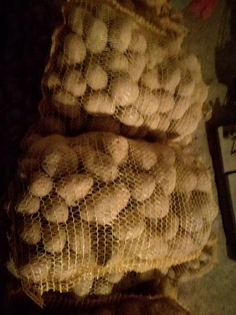 Ziemniaki jadalne, paszowe