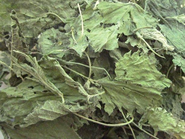 листочки крапивы для шиншилл, дегу и др. грызунов