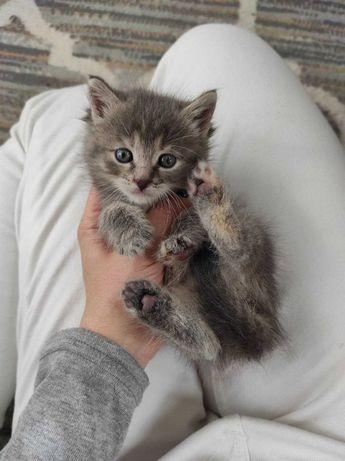 Найденный котенок в дар!