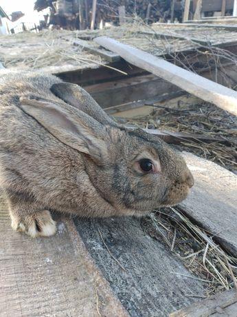 Продам Кроликів мішаних порід