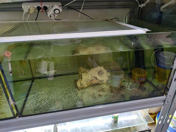 Aquário peixes