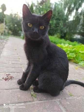 Czarna kocia księżniczka czeka na domek