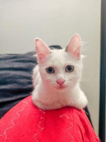 Gatos bebes de pelo comprido para adoção